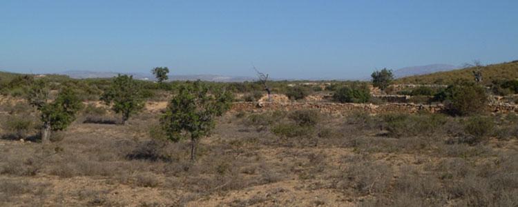 antiguas-terrazas-de-cultiv