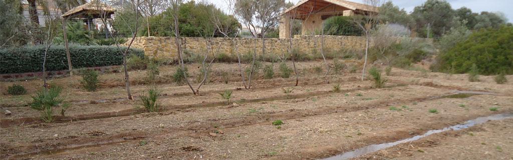 huerto-semillero